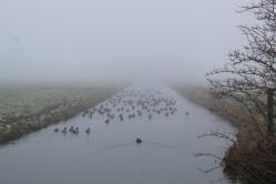 Smienten in mist (Middel)