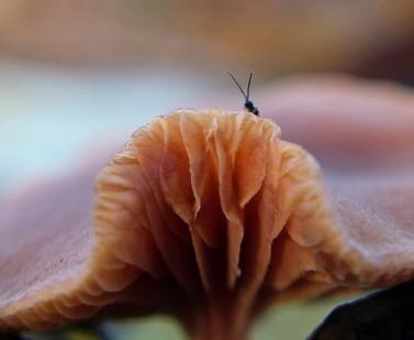 pado insect 1 (Middel)