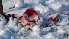 bekerzwam sneeuw 1 (middel)