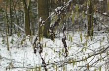 katjse sneeuw (middel)