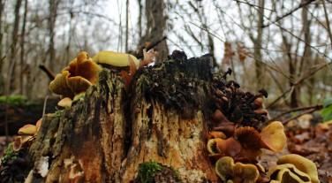 paddenstoelen 2 (middel)