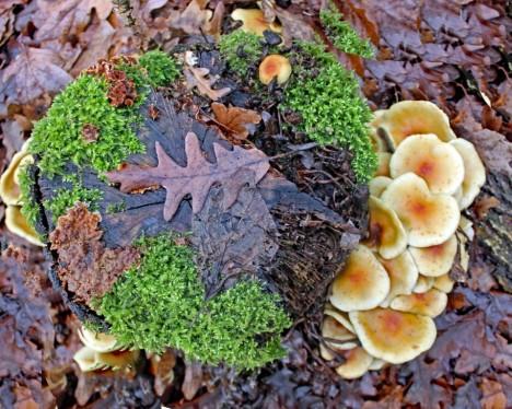 paddenstoelen 4 (middel)