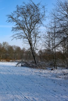 sneeuw 3 (middel)