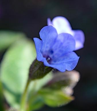 blauw bl (Middel)