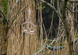 Vogeltjes glas (Middel)
