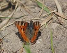 Vlinder .... (Middel)
