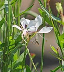 Bloemen tuin 3 (Middel)