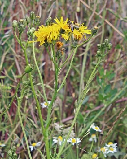 Gele bloemen (Middel)