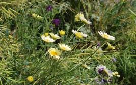Gele bloemenen (Middel)