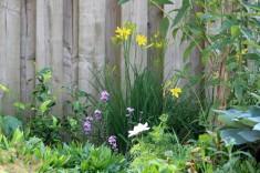 Tuin 1 (Middel) (Middel)