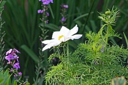 Tuin 2 (Middel) (Middel)