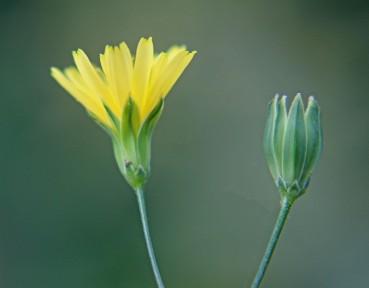 Bloemetjes geel (Middel)