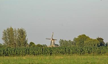 Molen (Middel)