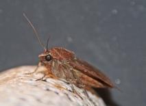 Nachtvlinder 3