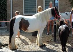 Paarden (Middel)