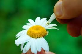 afbeelding-bloem