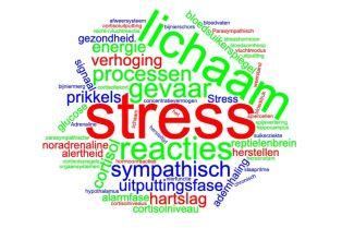 sympathisch-zenuwstelsel-en-stress