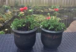 Tuin 2 (Middel)