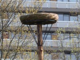 Leeg nest (Middel)