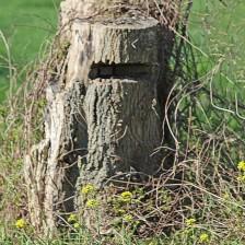 Stronkeen (Middel)