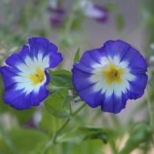 Bloemen tuin 434 (Middel)