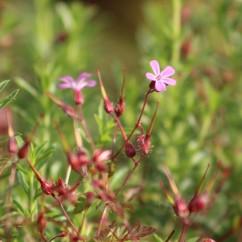 Tuin 1 (Middel)