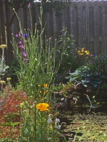 Wilde bloemen 24