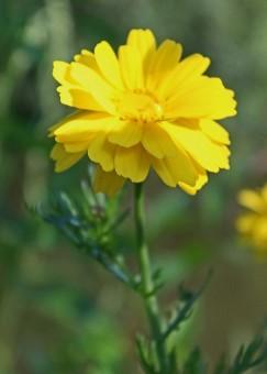 bloemen Loet 5 (Middel)